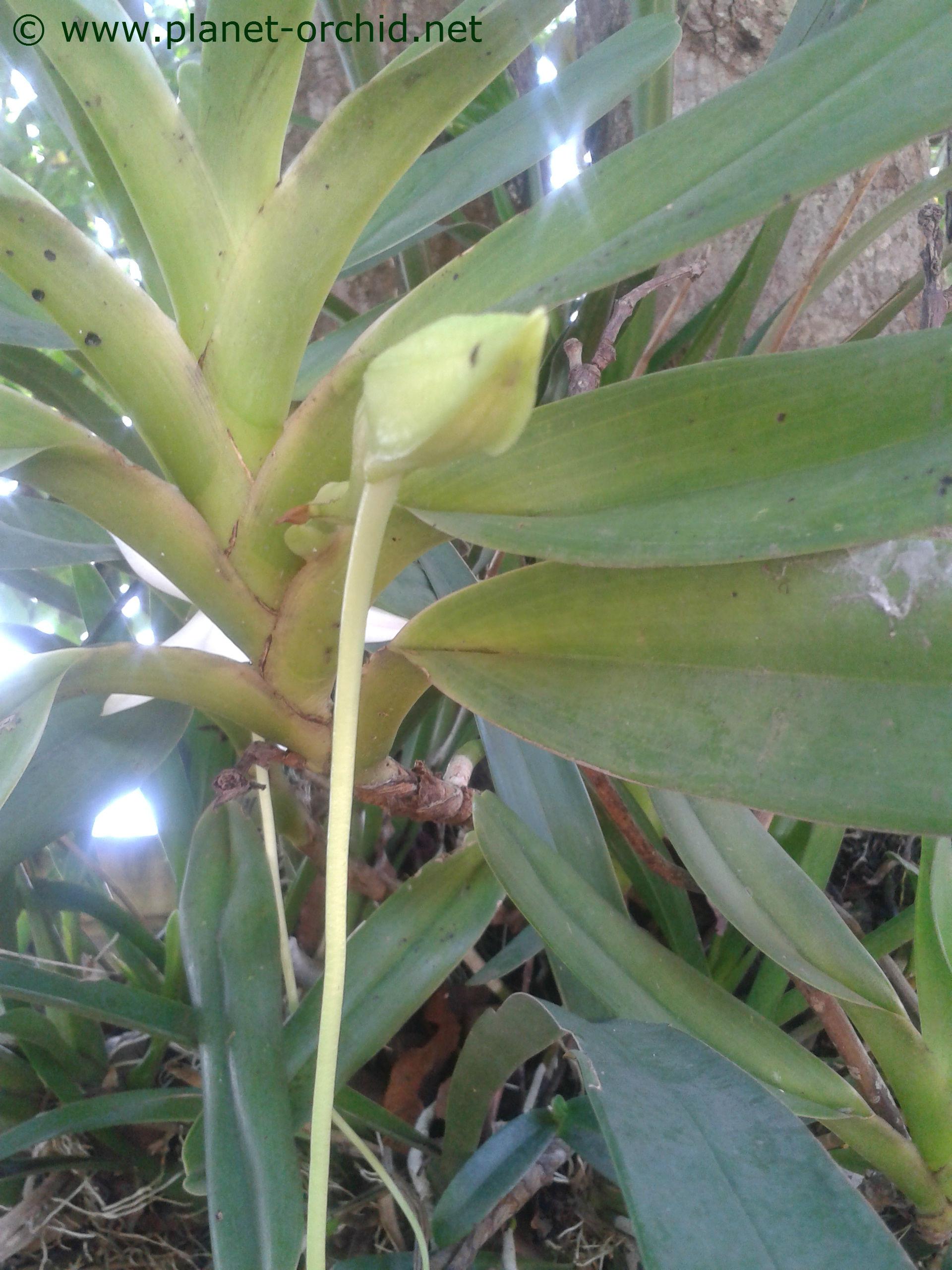 Faire refleurir une orchid e - Comment entretenir un orchidee ...